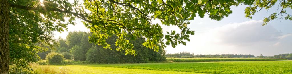 Surrey CBT landscape